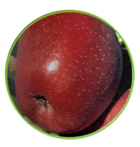 manzana super chief