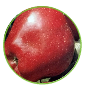 manzana red chief